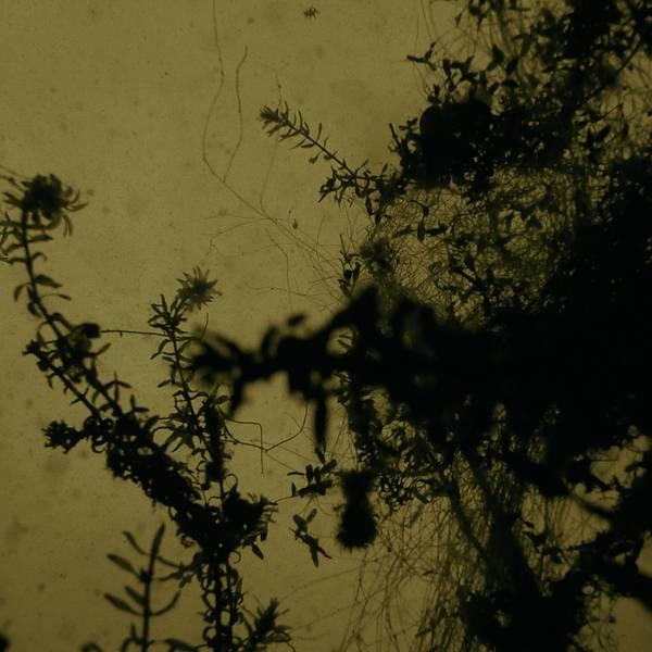 Memoryscapes: Exploring Grief in Vivian, Vivian and Waterfall